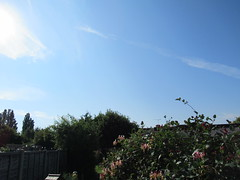 Saturday, 23rd, Starting the day with sunshine IMG_3118 (tomylees) Tags: essex morning summer canon powershot new july 2016 saturday 23rd weather blue