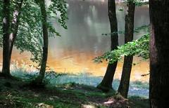 Nature (Doonia31) Tags: eau lac reflets arbres troncs rivage branches calme couleurs vert orange soleil lumire nature vgtaux feuilles