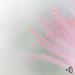 """Rêve végétal au festival international des jardins du domaine de Chaumont sur Loire • <a style=""""font-size:0.8em;"""" href=""""http://www.flickr.com/photos/53131727@N04/28688751400/"""" target=""""_blank"""">View on Flickr</a>"""