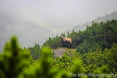 IMG_3438 (The Mitz Photography) Tags: gams grünersee hochschwab mariazell maryclan murmerl mädels nebel pilgern sommer steinbock wandern
