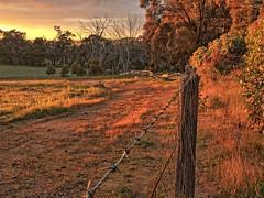 golden light (SUSETOZER) Tags: goldenlight goldenhour morning