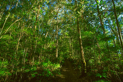 Forest walk and sunrays (indframe_photo) Tags: forestpath naturephotography forestwalk springbrooknationalpark lushgreentrees forestsunrays forestphotography iloveforest queenslandforest