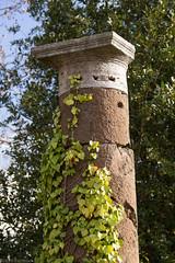 Vines on a column (kirill.bolshakov) Tags: italy rome architecture vines it column lazio ostiaantica ancientrome
