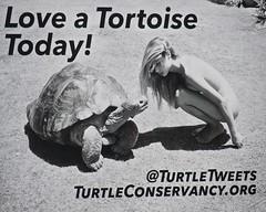 Love a Tortoise (mausgabe) Tags: nyc blackandwhite bw woman love nude noiretblanc tortoise olympus billboard today em1 thehighline turtleconservancy olympusm14150mmf4056ii