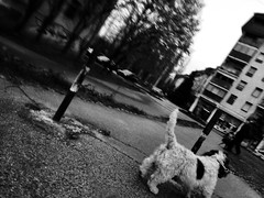 encounter (hnt6581) Tags: street bw dog apple monochrome mobile digital phonecam phone cellphone mobilephone phonecamera iphone arebureboke iphone5s littledoglaughednoiretblancet hnt6581