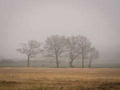 April morning fog (Teelicht) Tags: mist tree field fog germany landscape deutschland nebel feld landschaft braunschweig niedersachsen lowersaxony dibbesdorf