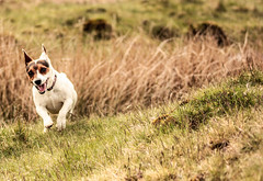 Having A Blast. (KeLouPhotography) Tags: dog pets motion cute animal canon photography companion