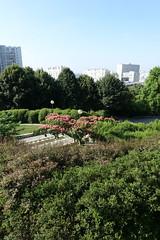 Albizia  flower @ Parc de Belleville @ Paris (*_*) Tags: paris france europe city summer 2016 july saturday sunny park parc belleville nature garden green albizia flower pink spike