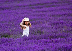 need to keep hold of my hat (sussexscorpio) Tags: lordington light child girl white lavender purple mauve violet blue colour color hat field sussex westsussex chichester canon canon60d countryside plants flowers nature blossom lavandula evergreen shrub scented perennial outdoor landscape portrait