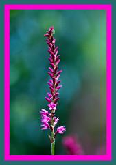 AH62_8235 (der_andyrandy) Tags: blumen blte macro natur outdoor canoneos7d amazingamazing thisphotorocks wow lila