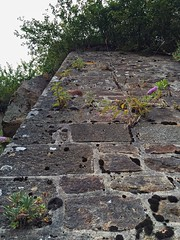 16-210 (Gray Singer) Tags: chateau castle ramparts walls normandie montsaintmichel budllia