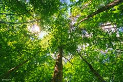Green tree (George-Raf) Tags: green tree olympos ellada trees