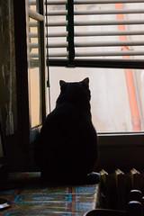 Le Chat (Francesco Macelloni) Tags: tuscany summer cat blackcat oltrarno santospirito florence boboli july