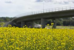 The Krigslida bridge (Steffe) Tags: bridge summer sweden haninge nedersta canolafield krigslidabron ndestavstergrd