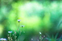 our world (hitohira_) Tags: flower flowers nature bokeh