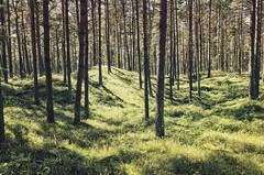 Hilly grassland forest
