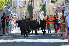 Abrivado_Voto_2016-25 (amcadweb) Tags: fontvieille camargue taureau fte