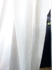 It's a complete mystery how my curtains get so fluffy! (Mini Mel) Tags: cat blackcat fluff window curtains housework feline eye