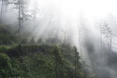 light party (Karin Ziegler) Tags: fog mist nature forest tree styria austria sterreich nikon d810 steiermark morning sunlight sunbeams 35mm