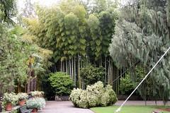2016-05-31-3251 (tonykliemann) Tags: italy isolamadre giardinobotanico