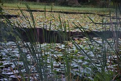 DSC_0119web (pedrop61) Tags: country mountains nature walking trekking roman valledaosta canavese boschi wood lake animali