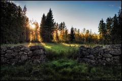 Stenmur (Jonas Thomn) Tags: stenmur stonewall opening ppning stone sten grass grs field ker skog forest sun sol evening kvll summer sommar
