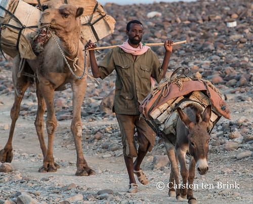Camel caravan at Hamadela