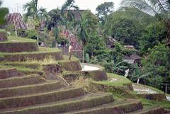 Rizires, Bali (maxguitare1) Tags: rizire paddyfield risaia campodearroz bali indonesie paysage landscape paesaggio paisaje