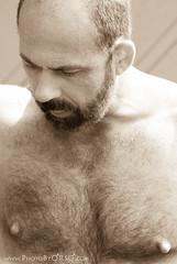 Bear Nipples... (Octane Photo) Tags: nipples beards facialhair hairychest bearpride