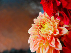 Nranj Fajr (Yahweh Nature) Tags: life pink light orange flower up petals flora day close colourful
