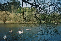 (nessisilva) Tags: film nature analog 35mm porto 200 vista plus konica agfa c35