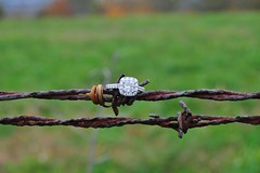 Jeron & Catelyn Ring Barbed Wire (emilysanto) Tags: field engagement wire pennsylvania country ring diamond barbed