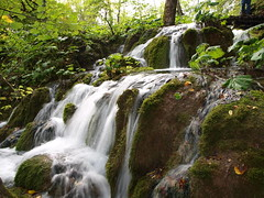 Plitvice lakes, Croatia (tonigirl_cro1) Tags: wood tree green nature water waterfall outdoor olympus toni priroda voda plitvicelakes uma zeleno plitvikajezera stabla tonigirl olympuse420