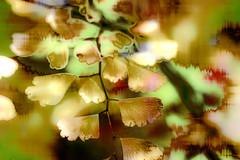 Hojas silvestres (seguicollar) Tags: hojas silvestres vegetal vegetación doradas plantas photomanipulación imagencreativa virginiaseguí artedigital art artecreativo