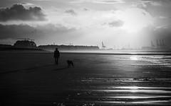 Walk this world with me (BWUA Photography) Tags: dog walk beach backlight nikon zeebrugge