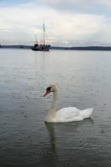 1978 (Mikael Laaksonen Photography) Tags: sea water rain boat muteswan