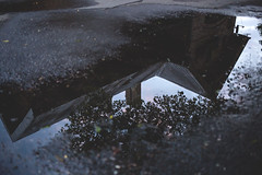 Relfection in the puddle (freestocks.org) Tags: asphalt building concrete dark gloom house nature puddle rain rainy reflection road sky street tree trees water wet