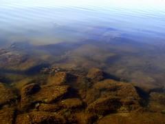 What is hiding under the Lake Balaton? (andraszambo) Tags: balatonivilág balaton lake see plattensee keszthely beach strand szeptember september víz vízalatti underwater watersurface tó freshwater édesvíz autumn ősz kövek stones hínár seaweed