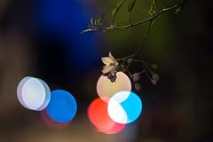 IMG_0241 (Lens a Lot) Tags: paris | 2016 pentax asahi smc takumar 50mm f14 1976 8 blades iris m42 14 flower bokeh depth field color blue green red yellw night sky star light vintage classic japanese manual prime lens