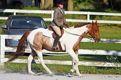 IMG_2550 (SJH Foto) Tags: horse show hunter jumper class girls teenage teen riders action shot tweens