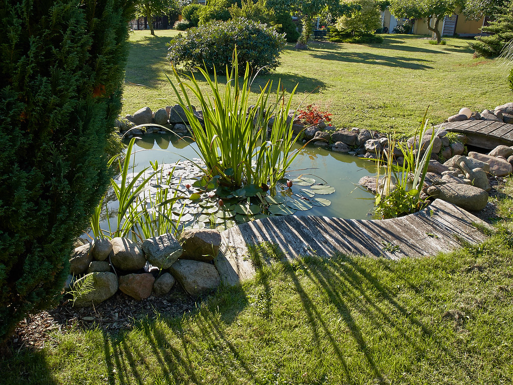 The world 39 s best photos by landscapingokc flickr hive mind for Outdoor pond plants
