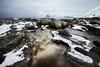 Frozen (vandrende) Tags: lofoten myrland nor nordland landscape landskap norway paysage