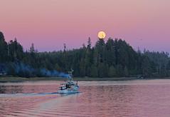 full steam ahead! (pakhouse@att.net) Tags: moonrise nightfishing dusk harbor canada ucluelet