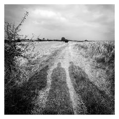 OMBRES (yannick_bardagi) Tags: noiretblanc blackwhite paysage formatcarr ombres shadows