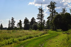 early summer light (JoannaRB2009) Tags: summer green path nature meadows road countryside trees sky blue clouds light shadow rural feliksw dzkie lodzkie polska poland dolinaneru meadow grass landscape view