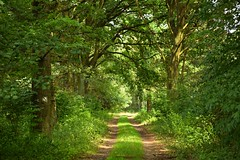 summer at its best (JoannaRB2009) Tags: nature summer green plant miliczponds lowersilesia stawymilickie dolnylsk dolinabaryczy path road forest trees