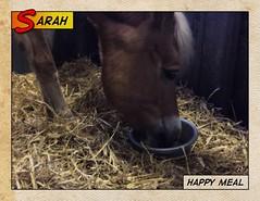 Sarah (gill4kleuren - 12 ml views) Tags: life horse me sarah fun outside happy running gill saar paard haflinger
