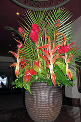 tropical arrangement (BarryFackler) Tags: life flowers nature beauty leaves botanical island hawaii polynesia hotel ginger flora waikiki oahu lodging blossoms ceiling lobby tropical vase honolulu blooms floralarrangement botany biology heliconia palmfronds silveranniversary redginger tropicalflowers royalhawaiianhotel 2015 anthuriums 25thweddinganniversary theroyalhawaiian barryfackler barronfackler