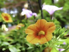 Spring Flowers DOF