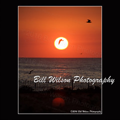 sunrise NJ shore (wildlifephotonj) Tags: sunrise terns sunrisesandsunsets beachsunrise beachphotos sunrisenj beachesnewjersey sunrisenewjersey ternssunrise